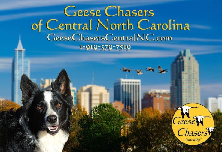 10 Pest Control Franchise Opportunities to Consider - Geese Chasers