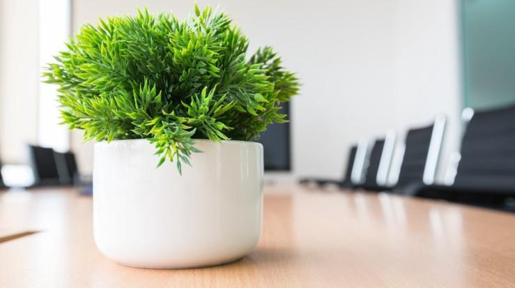 25 Office Desk Plants