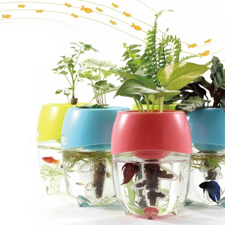 25 Office Desk Plants - Aquaponic Fish Tanks