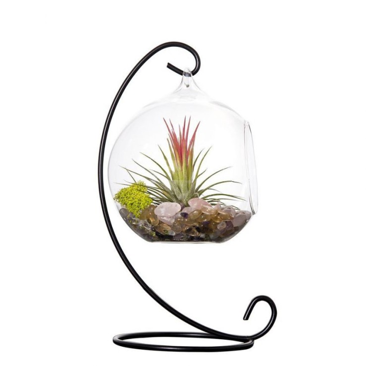 25 Office Desk Plants - Globe Terrarium With Metal Stand