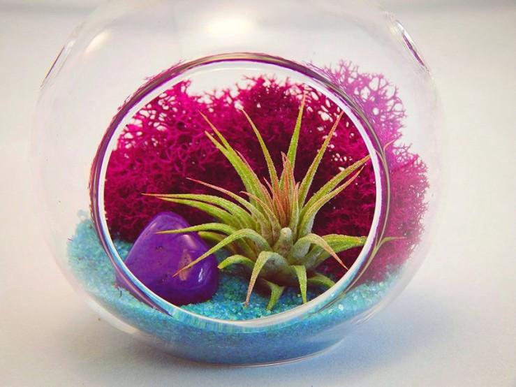 25 Office Desk Plants - Air Plant Terrarium