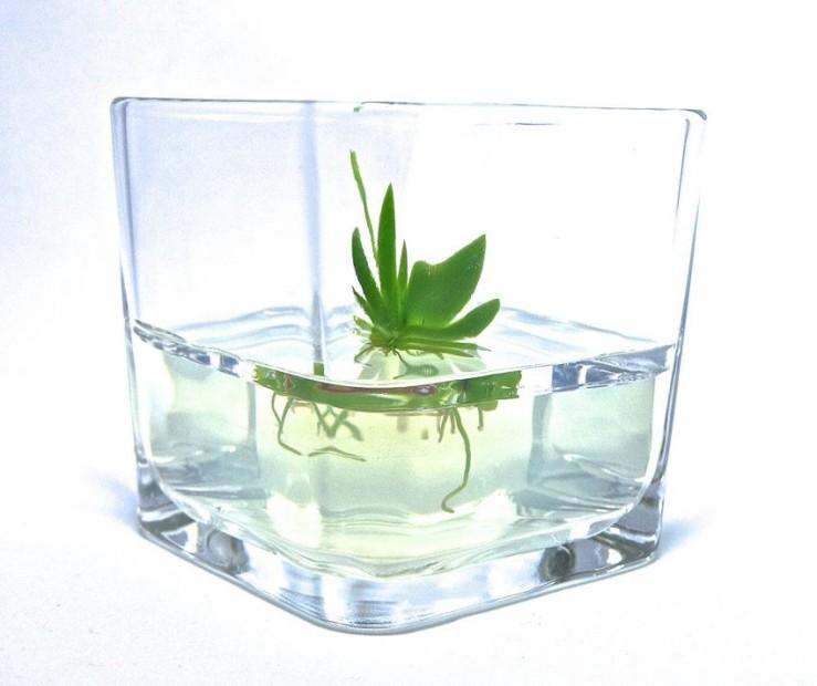25 Office Desk Plants - Zero Maintenance Orchid Bonsai